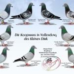 Brieftauben Koopmans Kleine Dirk